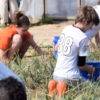 Youth Day of Service atShalom Farms